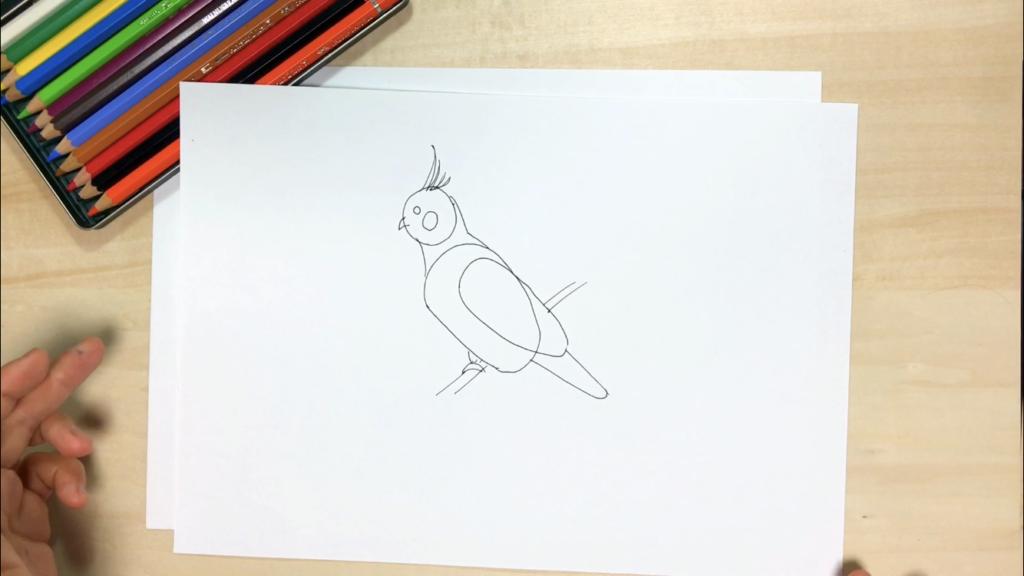 インコの簡単なイラストの描き方