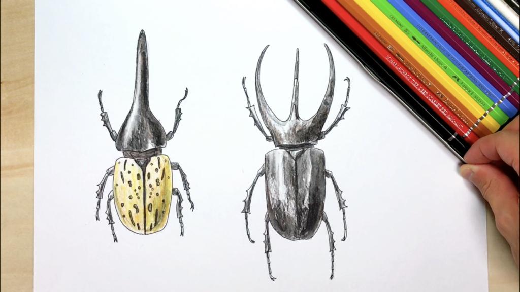 カブトムシの簡単な手書きイラストの描き方! コーカサスオオカブトとヘラクレスオオカブト