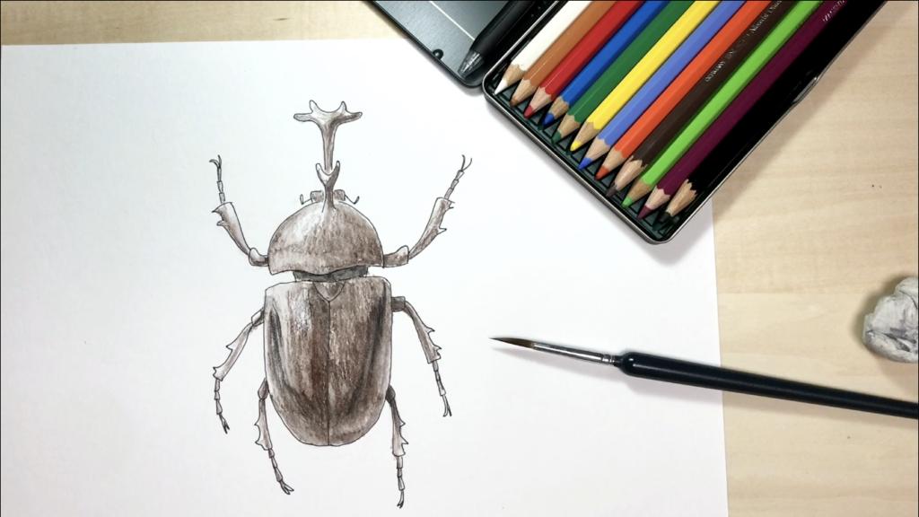 上から見たカブトムシの簡単な手書きイラストの描き方!【水彩色鉛筆とペン】