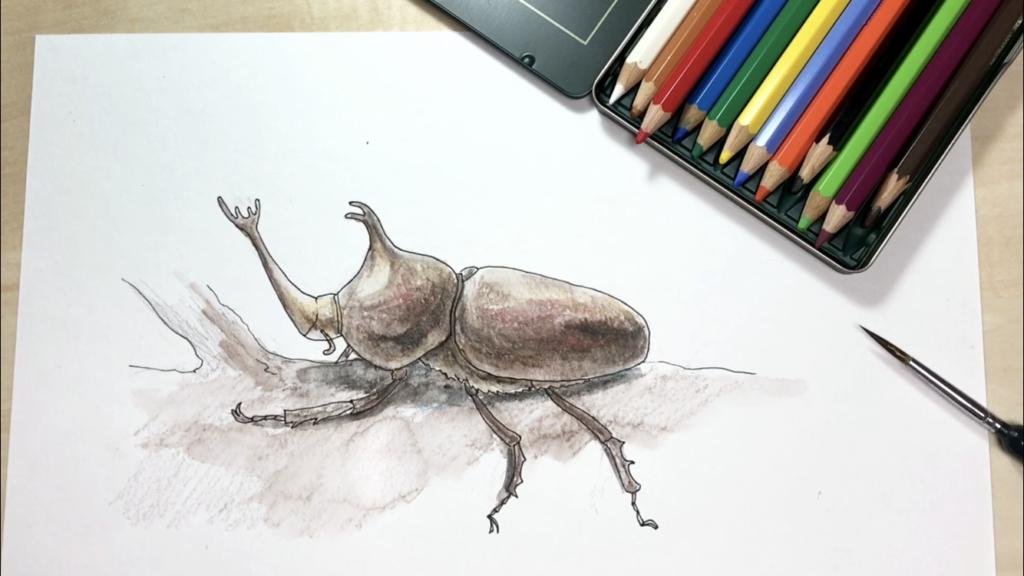 横から見たカブトムシの簡単な手書きイラストの描き方!【水彩色鉛筆とペン】